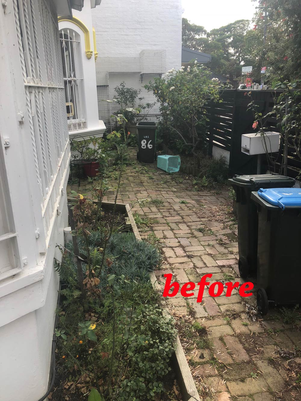 Inner-west Sydney garden clean-up beforehand