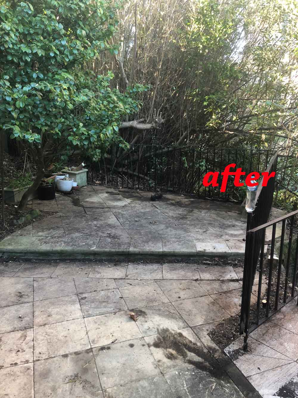 Woollahra Garden Tidy Up After Picture Arc Services